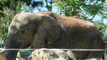 medium_elephant_IMG_3443.jpg