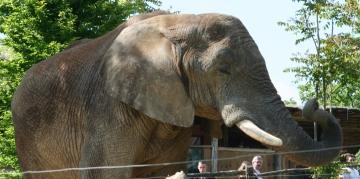 medium_elephant_IMG_3444.jpg