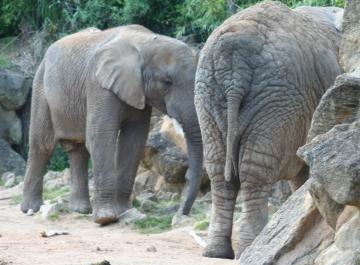 medium_elephant_IMG_3449.jpg