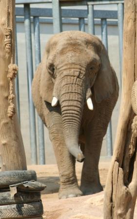 medium_elephant_IMG_3851.jpg