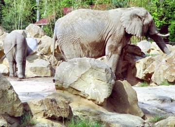medium_elephant_scanimage11.jpg