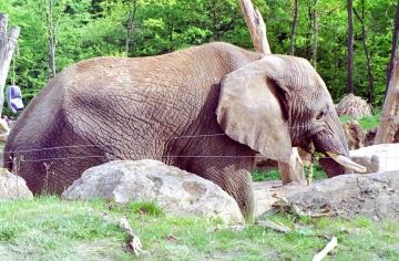 medium_elephant_scanimage15.3.jpg