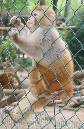 medium_rhesus_img_0235.jpg